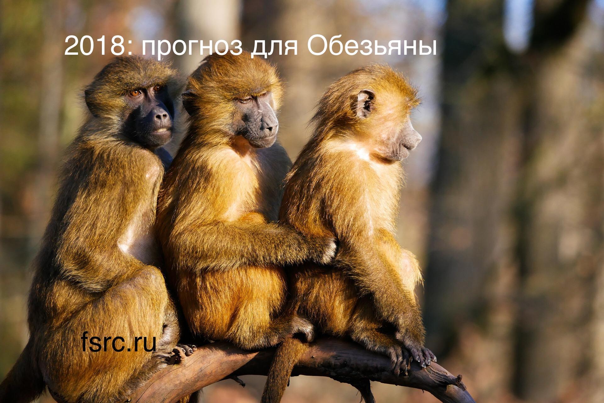 2018 Прогноз для Обезьяны - Fengshuimaster.ru